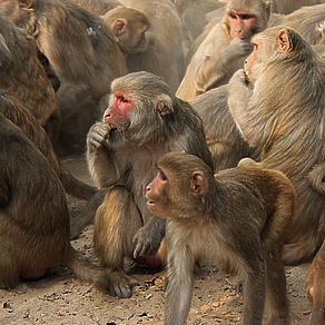Kartik Inspiration 2019 Day 12 - The Monkey Man