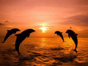 The Singing Dolphins